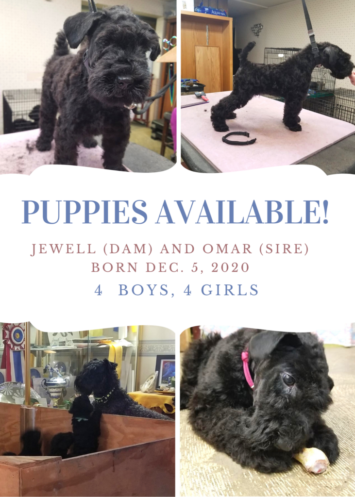 Puppies Available! Jewell and Omar pups born December 5, 2020. 4 boys and 4 girls.